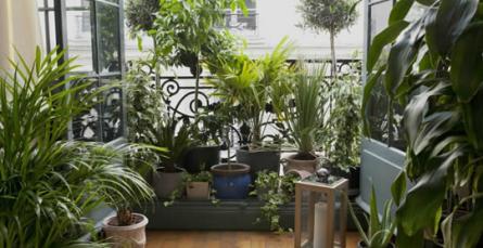 Em cada divisão, uma planta de interior