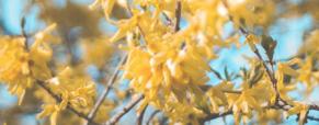 Conselhos básicos para uma varanda com flores