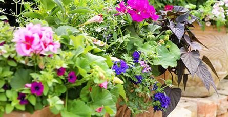 Composição de uma varanda de flores: as combinações certas