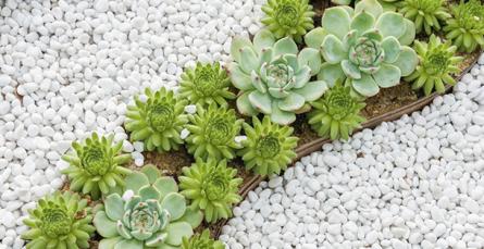 Como criar um jardim de pedras?
