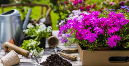 10 flores de verão para vasos e floreiras em pleno sol