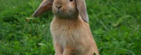 Os 6 coelhos anões mais populares