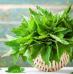Top 5 das Plantas Selvagens Comestíveis