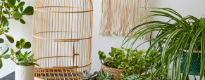 Escolher plantas para pequenos espaços
