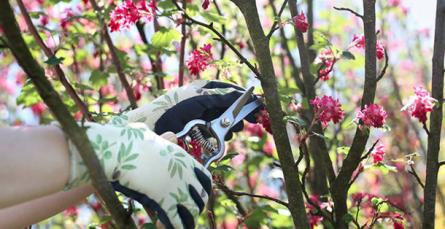 Pode os arbustos de floração no verão ou outono