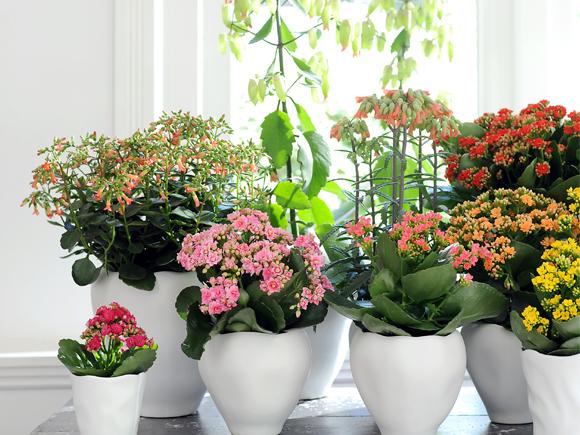 assim na realidade to simples como colocar a planta vista para que se sinta muito melhor uma pesquisa sueca por exemplo demonstrou que os
