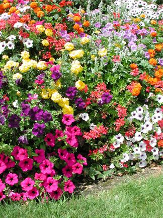 Plantas de exterior con flor resistentes top perfect with plantas con flores todo el ao para - Plantas de exterior resistentes al frio y calor ...