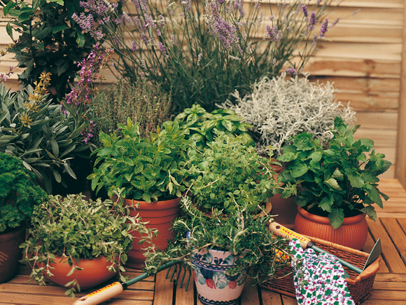 As ervas arom ticas jardiland portugal jardiland portugal - Jardin de aromaticas ...