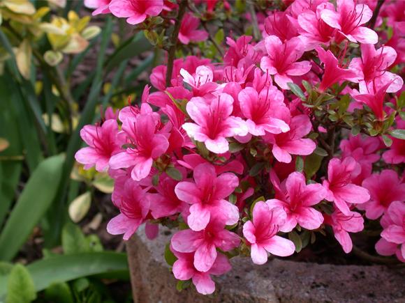 Pragas E Doenças De Plantas Com Flor E De Interior Jardiland