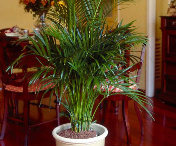 Plantas que purificam o ambiente mat rias bevilacqua for Mueble para plantas exterior