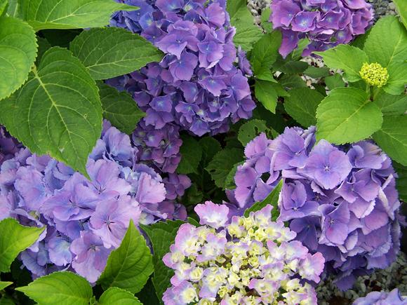 As plantas e flores de outono jardiland portugal for Plantas exterior sol