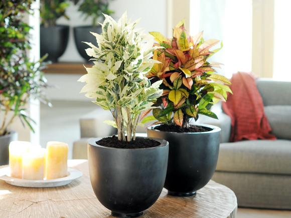 Como cuidar das plantas de interior no ver o jardiland for Plantas de casa para interior