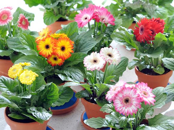 Visite a nossa feira de plantas de interior jardiland portugal jardiland portugal - Variedades de plantas de interior ...
