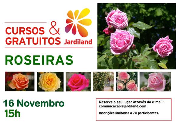 Roseiras 16Novembro