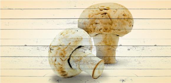 cogumelo1