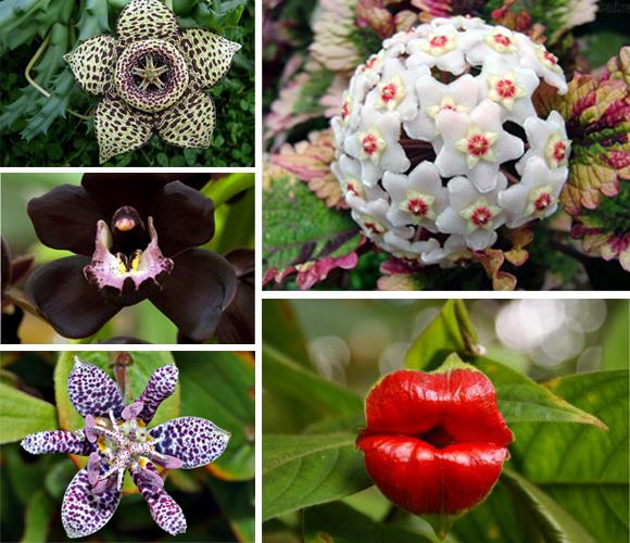 flores-increibles-1