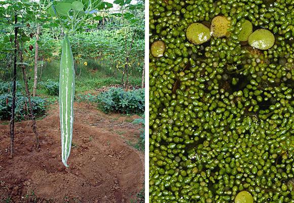 plantas-increibles-2