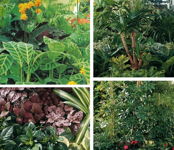 plantas-verdes-1
