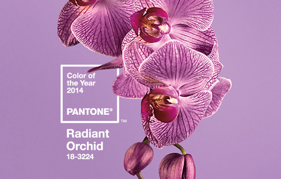 radiant-orchid-bg