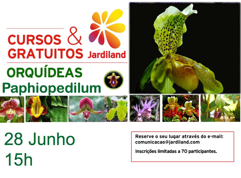 curso orquideasPaphiopedilum_28jun