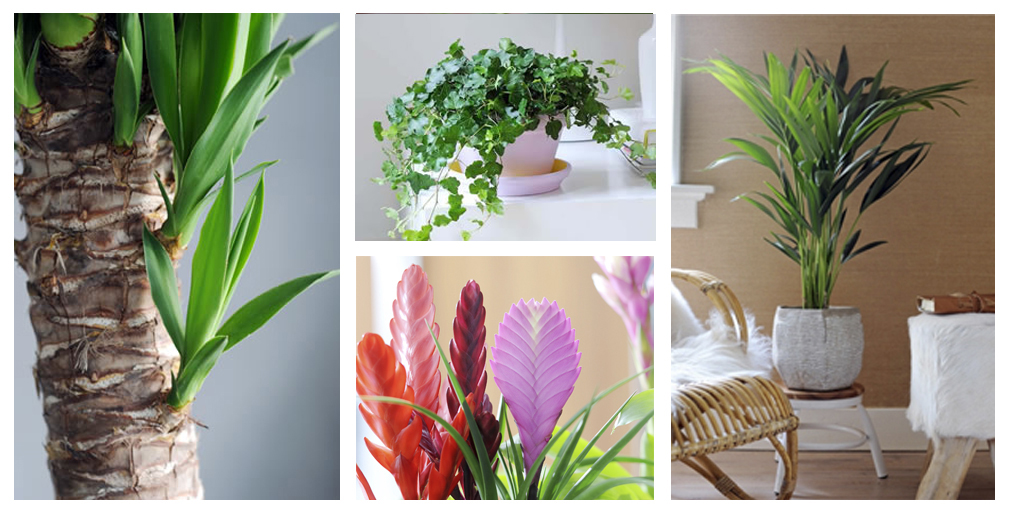 Pin plantas para interiores imagem 2 on pinterest - Plantas bonitas de interior ...