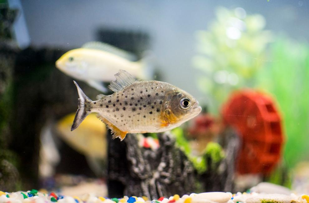 aquariofilia2
