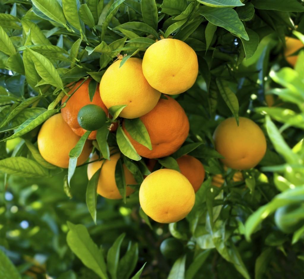 naranjas02-1024x939