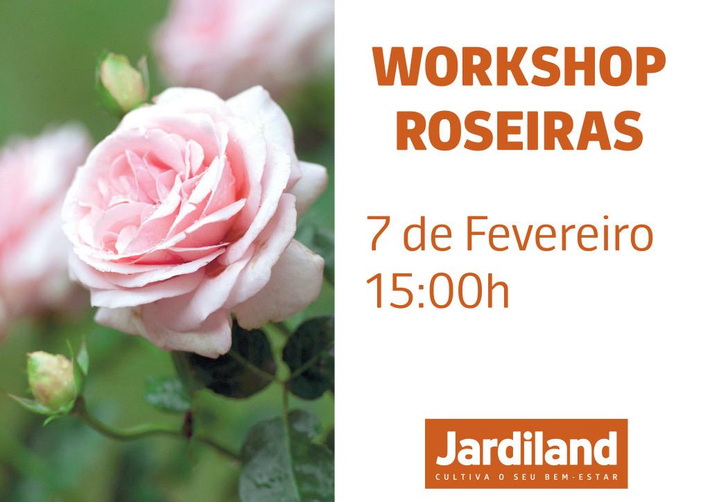 roseiras_7fevereiro