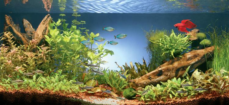 acuario01