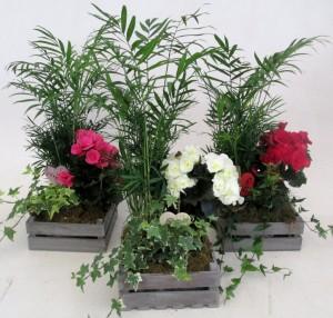 planta-variada-1-1024x975