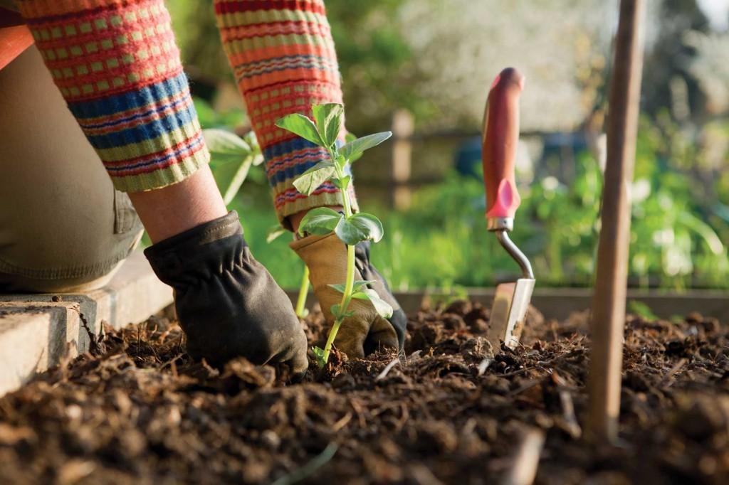 BACKGROUND-gardening-1024x682