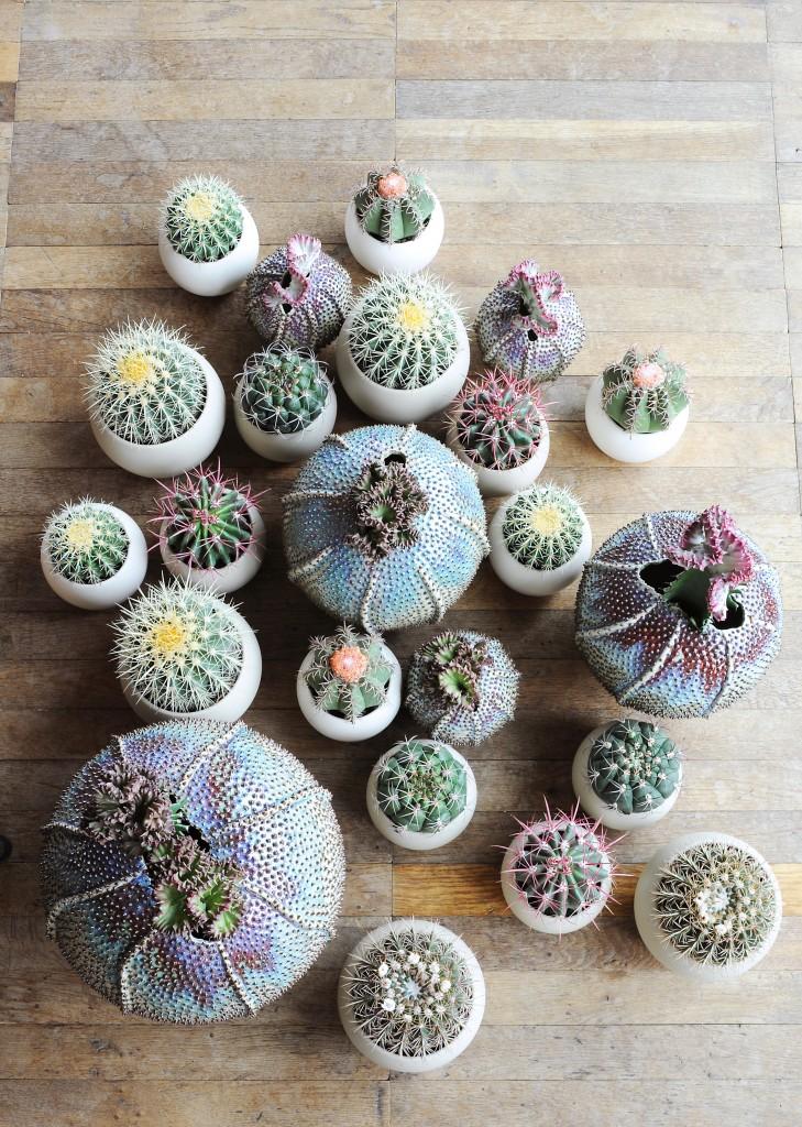 06_Cactus9-729x1024