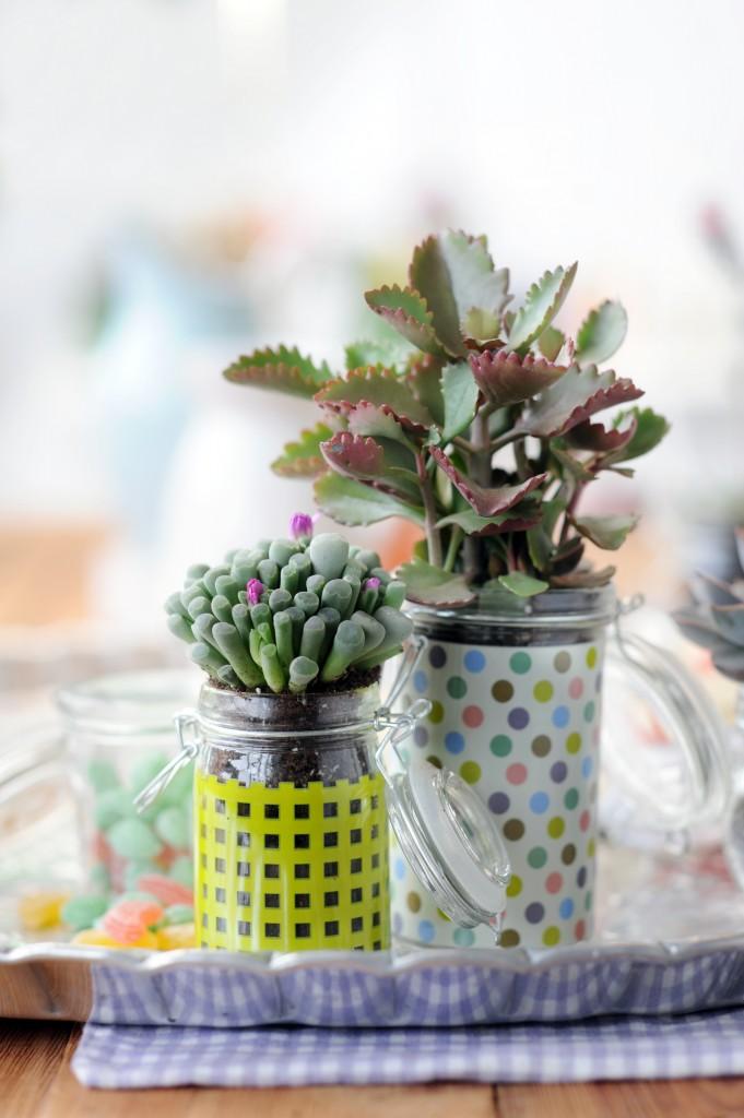 Succulenten.7-681x1024