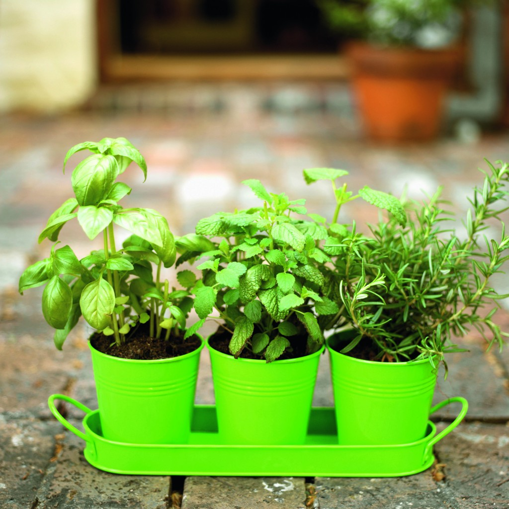 Plantas arom ticas ideais para o interior da casa ou Plantas baratas de exterior