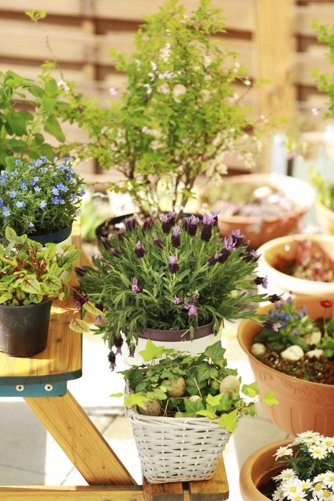 Plantas arom ticas ideais para o interior da casa ou for Plantas aromaticas interior