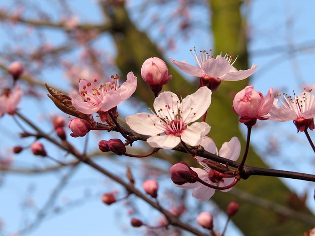 bloom-755288_640
