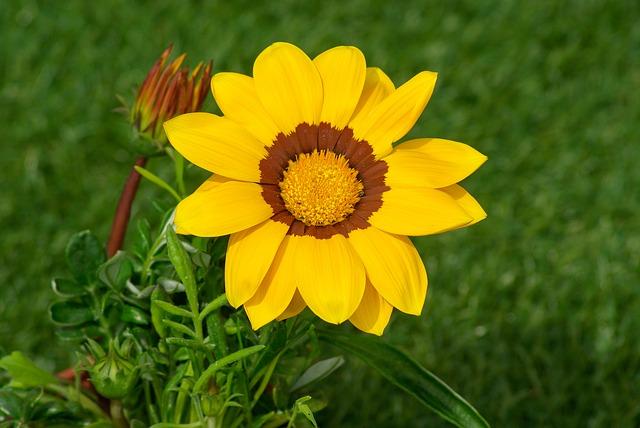 flower-728813_640