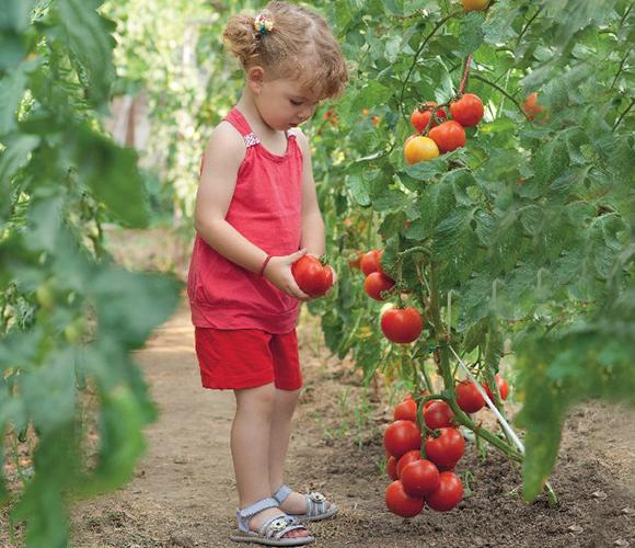 regar-tomates-verano