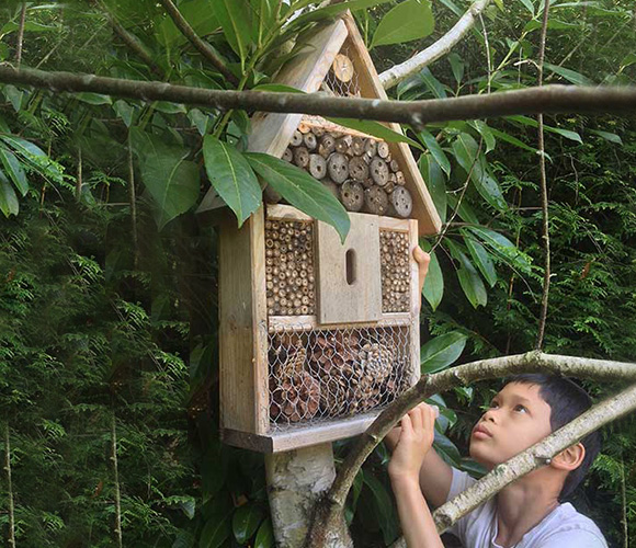 hotel-insectos