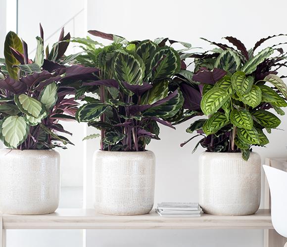 plantasdeinterior3