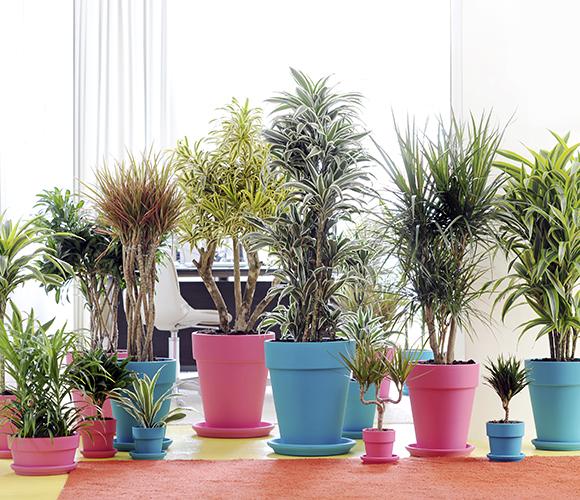 plantasdeinterior4