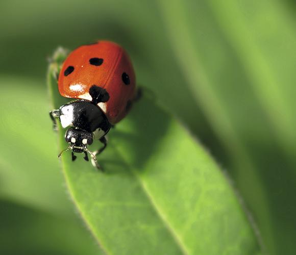 refugio_insectos1