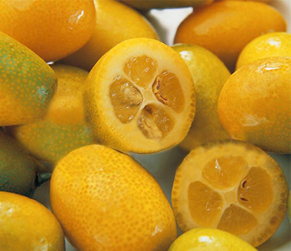 kumquat_